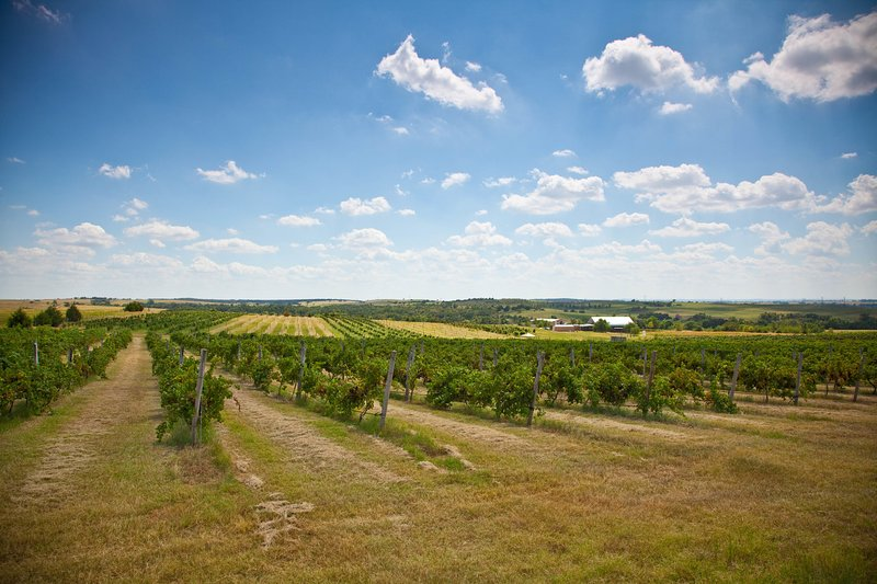 Oklahoma's Largest Vineyard! What a relaxing place to stay!
