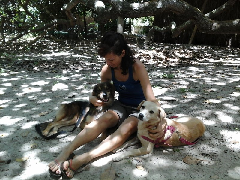 Nature Retreat with Healing Dogs in Brazil - Suite Curió, holiday rental in Monte Gordo