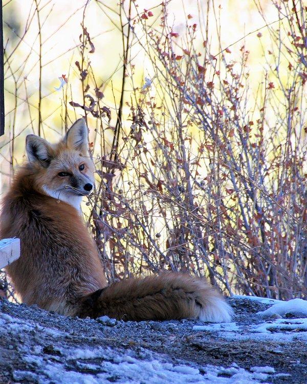 En el bosque nacional a menudo hay un par de ojos que miran!