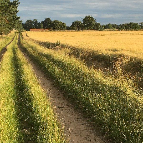 Inspiring walk from Waldringfield to Hemley - next village downriver