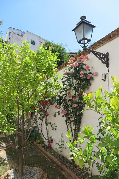 Rosas no pátio
