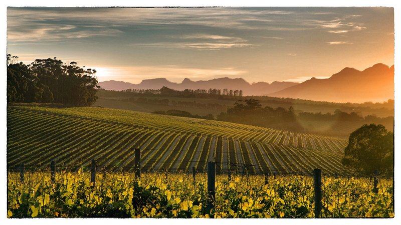 Kenridge vineyards