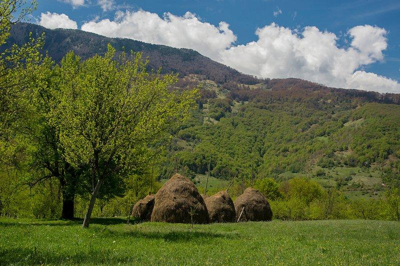 Family farmsted, alquiler vacacional en Kolasin Municipality