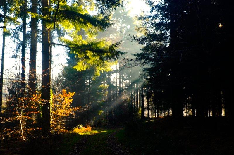 Las impresionantes bosques naturales de Medio Coombe Farm