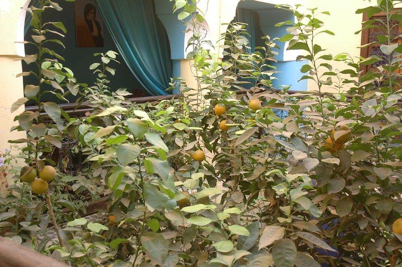 Traubenobstbaum im Hof mit zwitschernden Vögeln eingebettet