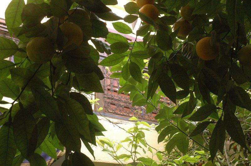 Orangenbaum mit Vogelgezwitscher im Innenhof gelegen