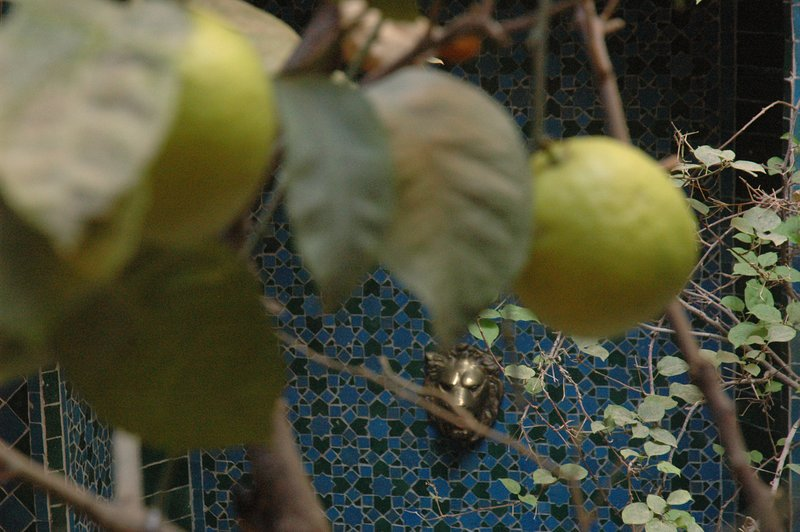 Citron árvore situada no pátio com pássaros cantando