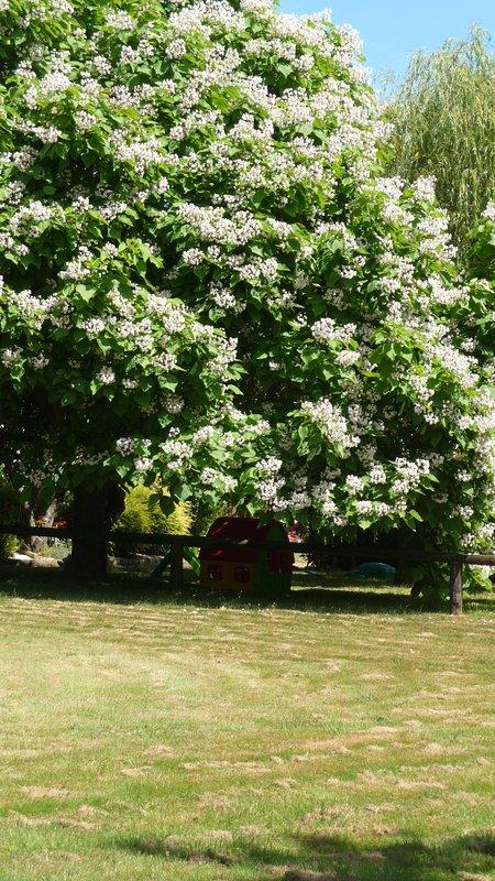 Parc de Lutin 2016: area di gioco piccolo childrend sotto l'albero 'popcorn'