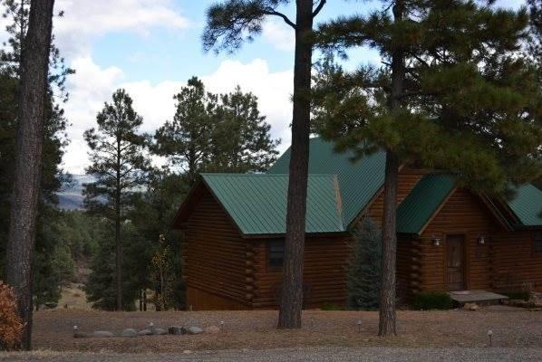 Building,Cottage,Shack,Shelter,Forest