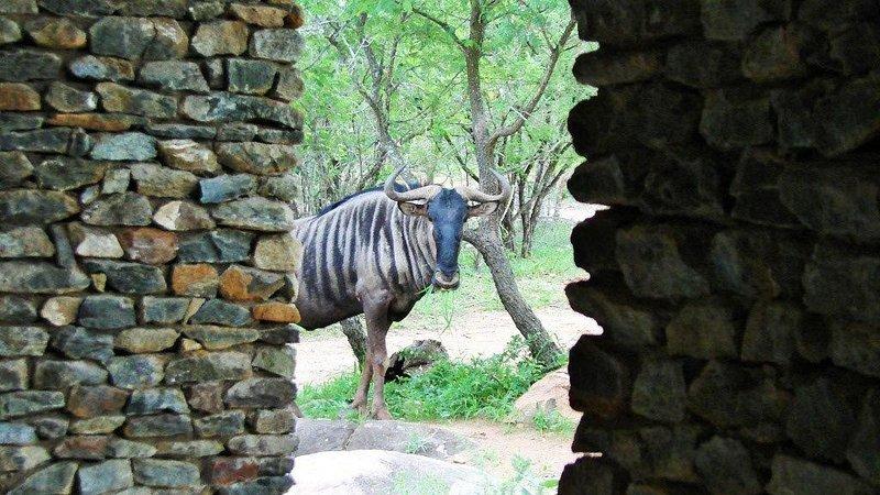 Luxury for the discerning traveler, hear lions roar., location de vacances à Marloth Park