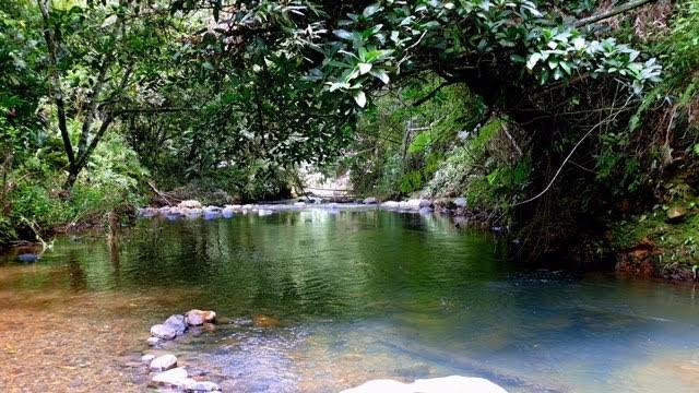 Visiter la Martinique - une rivière au nord