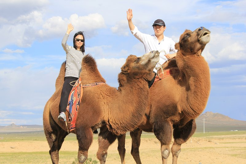 Feel the real on camels