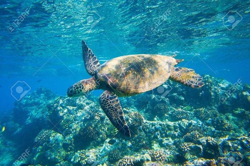 natation tortue à Ho'okipa plage, à 4 min. conduire