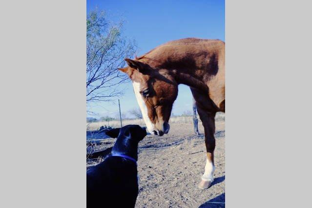 Llevar una manzana para los caballos amistosos.