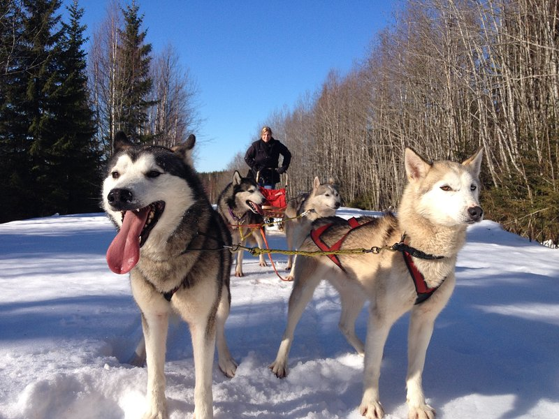 We offer also dogsledding and other activities By interest write to your booking.