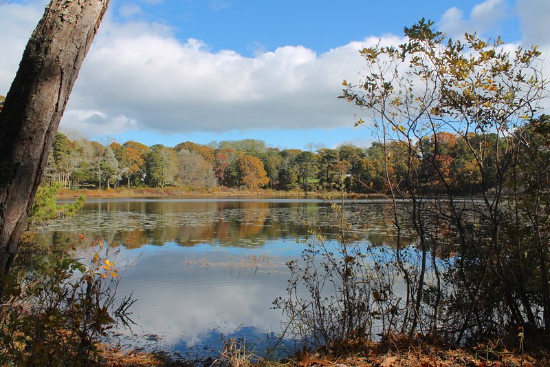 Another view of the pond from the shore.