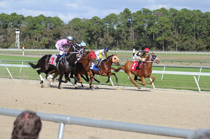 Tampa Bay Downs Race Track