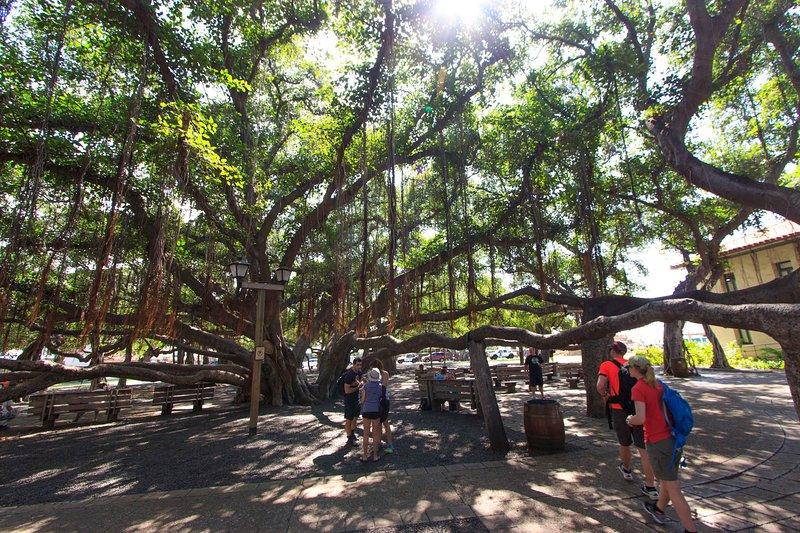 Banyan Tree Park está a sólo una cuadra