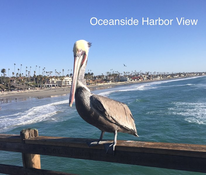 Pete the pelican greets all our guests on the Oceanside pier. Pete loves for you to take his photo.