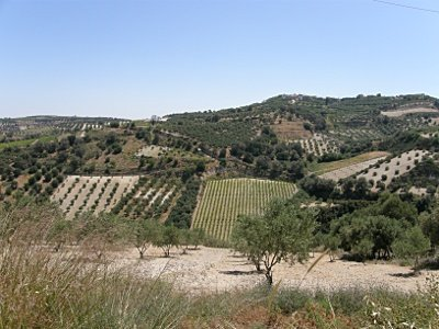 Vineyards and Olivegroves, landscape of Malevizi area, where Pendamodi is.