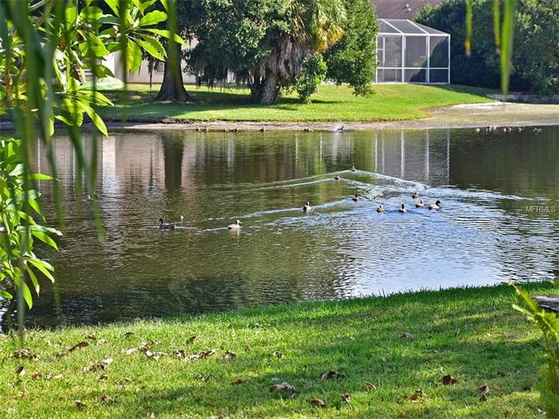 amazing view of lake in a park setting where blue heron,rosette spoonbills, ducks, egrets visit dail