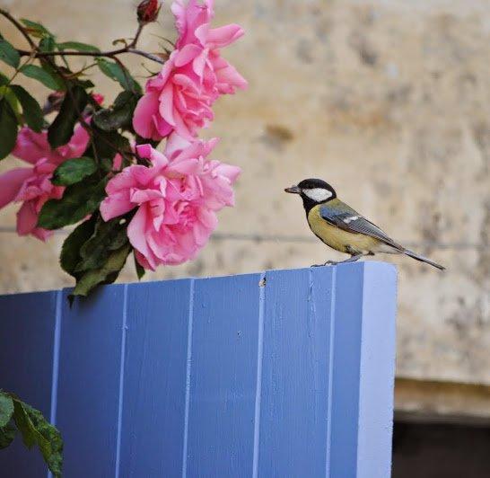 regelmatige bezoekers van La Batonniere