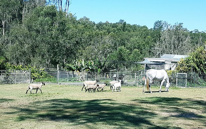 Castilla Del Amor - Cottage on Farm, holiday rental in Macleay Island