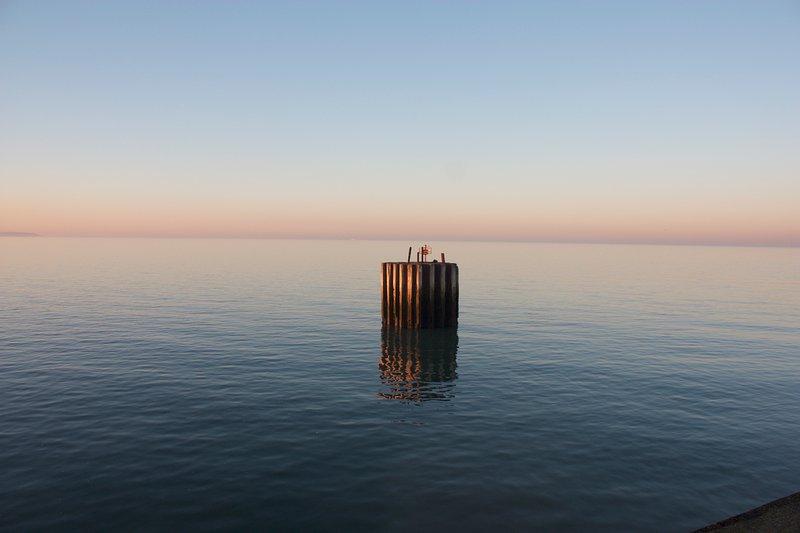 suave marea y la estructura del delfín