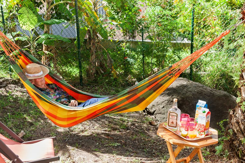 in the shade of palm Phoenix nap or drink, the dream! Hammock and sun loungers.
