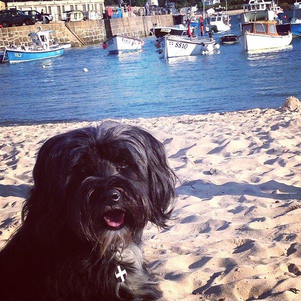 Izzy nuestra terrier tibetano disfrutando de sus vacaciones (se admiten perros en las playas de la ciudad de Octubre - sólo de Pascua)
