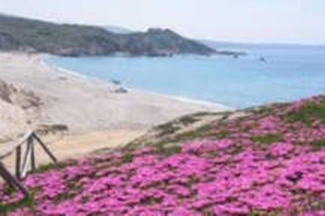 The beach Rena Matteu