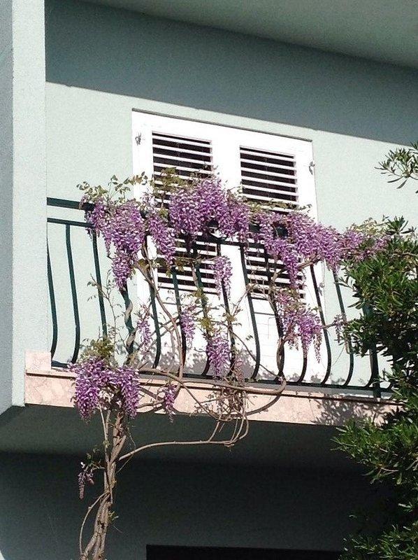 Villa in big blooming garden
