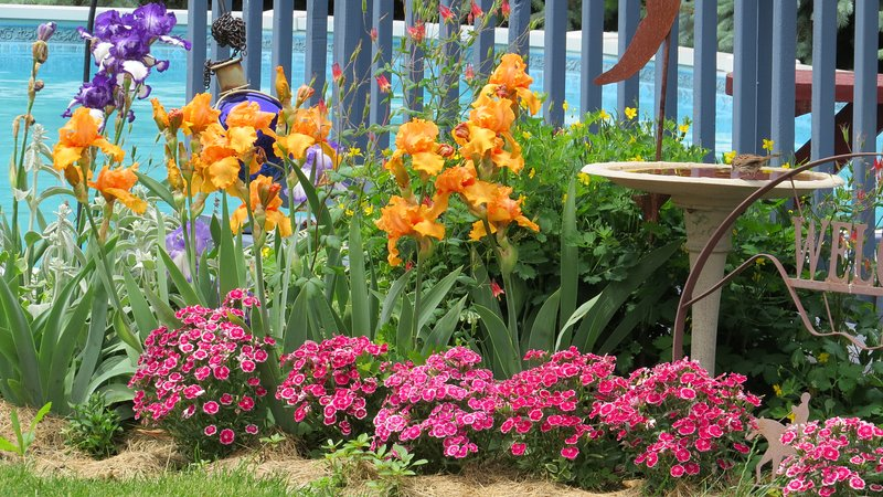 One of Kathy's many flowerbeds.