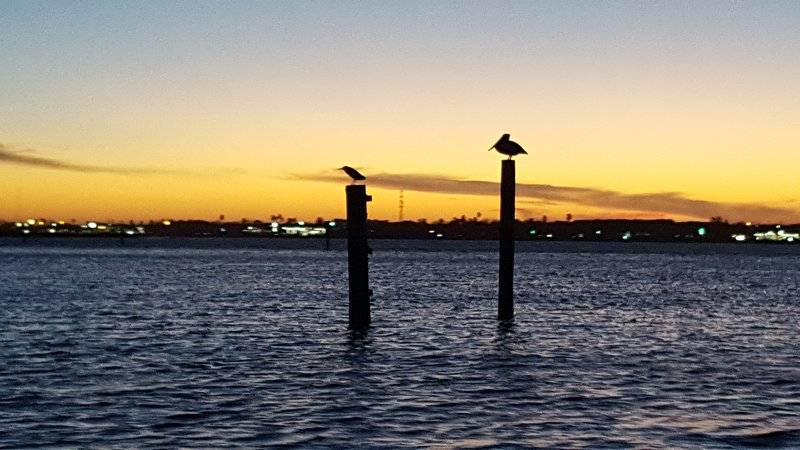 View of local birds from the dock at sunset