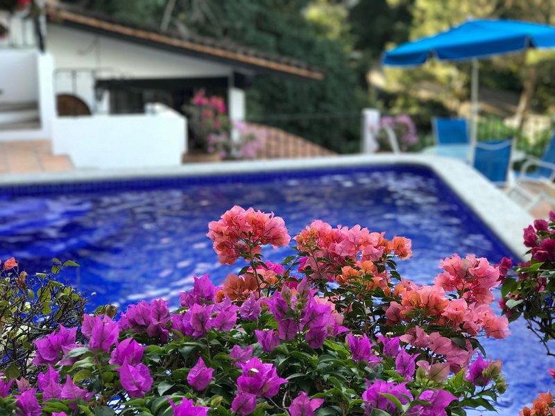 Bougainvillea surrounds our ocean view pool