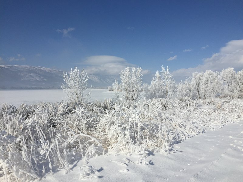 Pine View in the winter