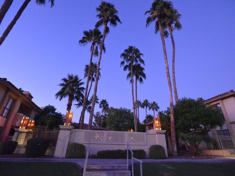 Towering Palms at Sunrise Pool