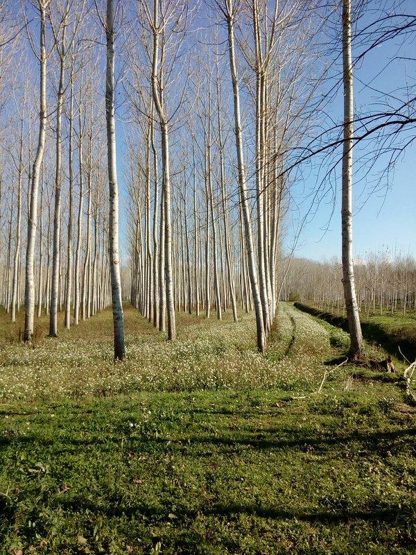 Paysage dans le Parc Naturel L'Estany, à 4 km de la villa