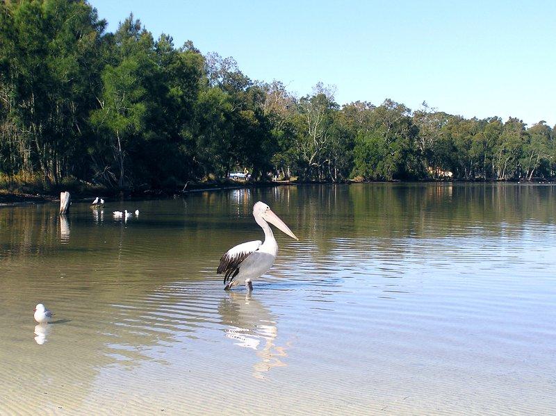 La faune à la base du jardin et les eaux cristallines de St Georges Basin - grande pêche!