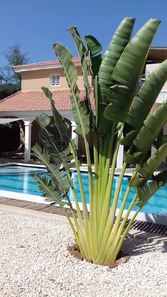 Villa Marjolaine, vacation rental in Thies Region