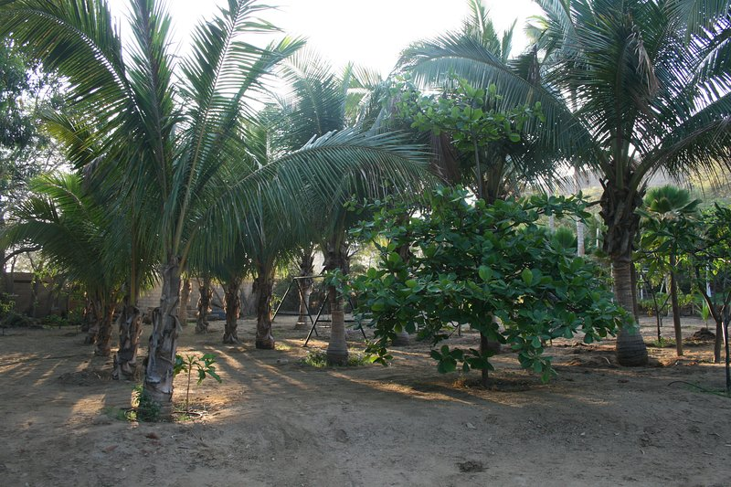 Palm grove and swings
