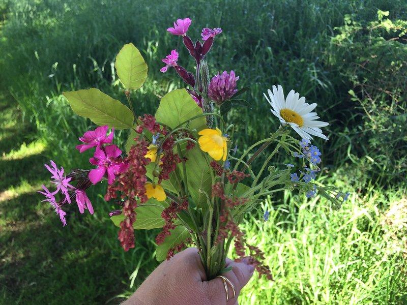 Wild flowers from meadow