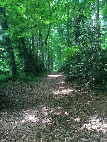 El bosque privado / La forêt