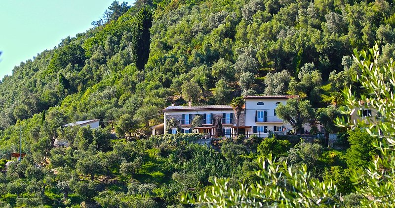 Front of both houses in olive grove setting, sun terrace, nature, great views, super pool - perfect!