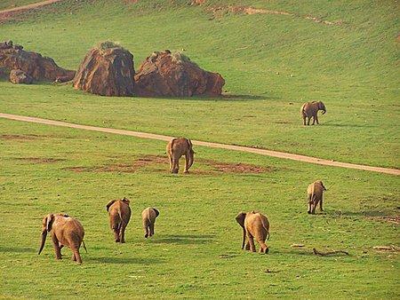 Cabarceno natural park-Cantabria