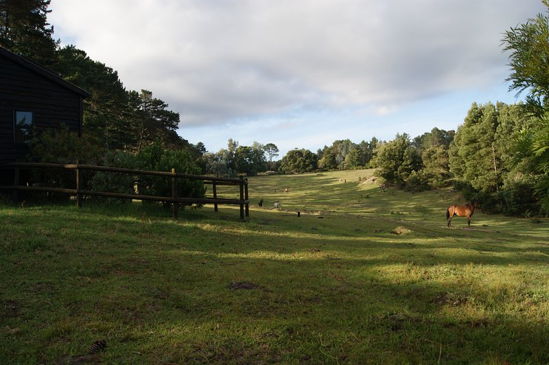 Cosy cabin | fireplace | free-roaming horses | forest walks | natural peace, holiday rental in Plettenberg Bay