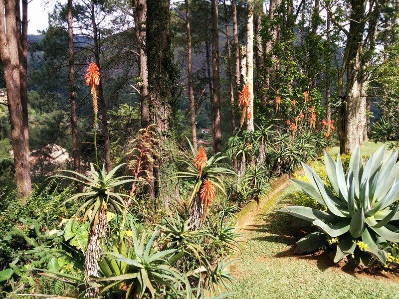 property's garden