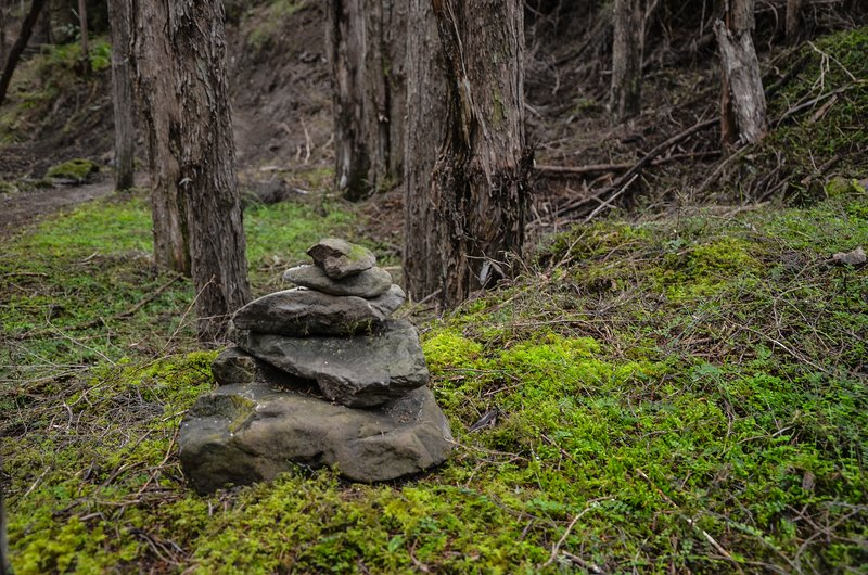 There is a beautiful 10-15 minute nature walk from the carpark to the PurePod
