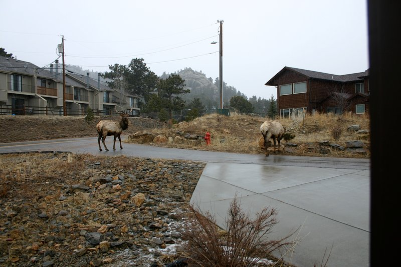 Driveway visitors