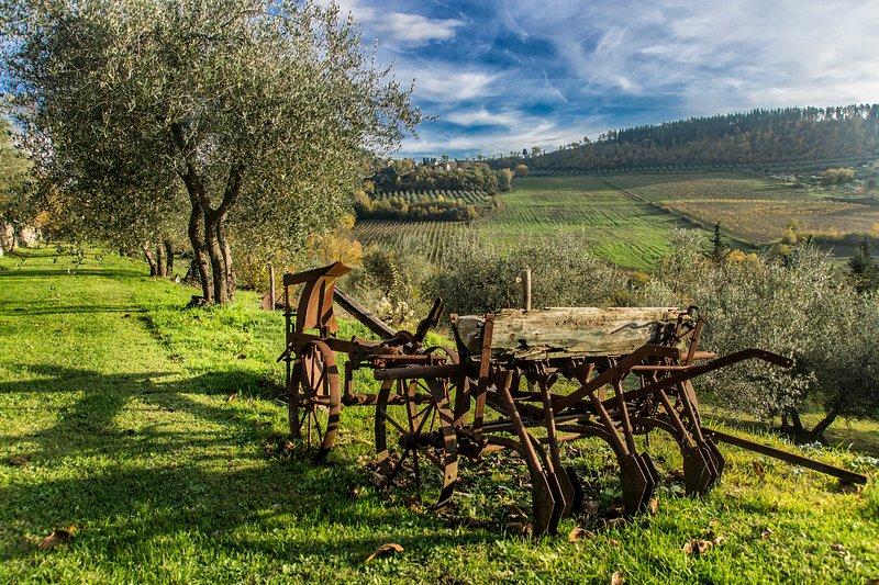 Garden and countryside